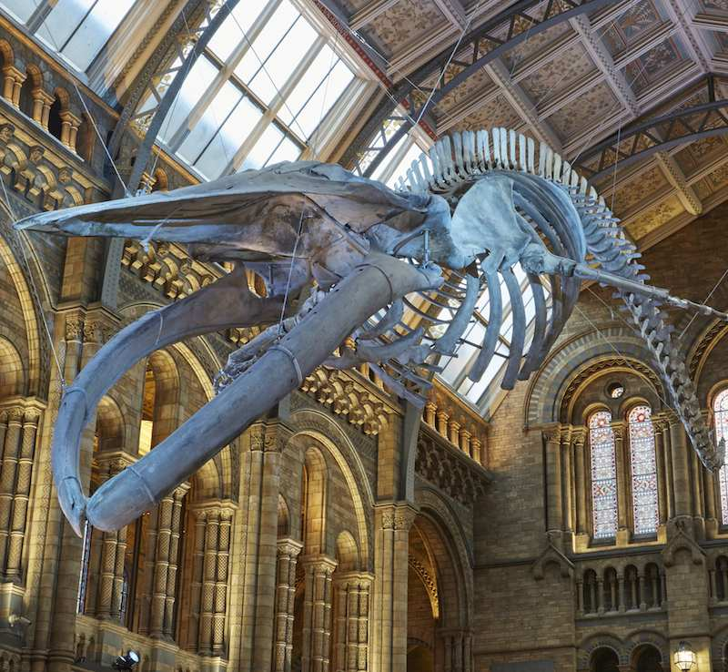 creative industries federation third anniversary celebration hintze hall nhm blue whale